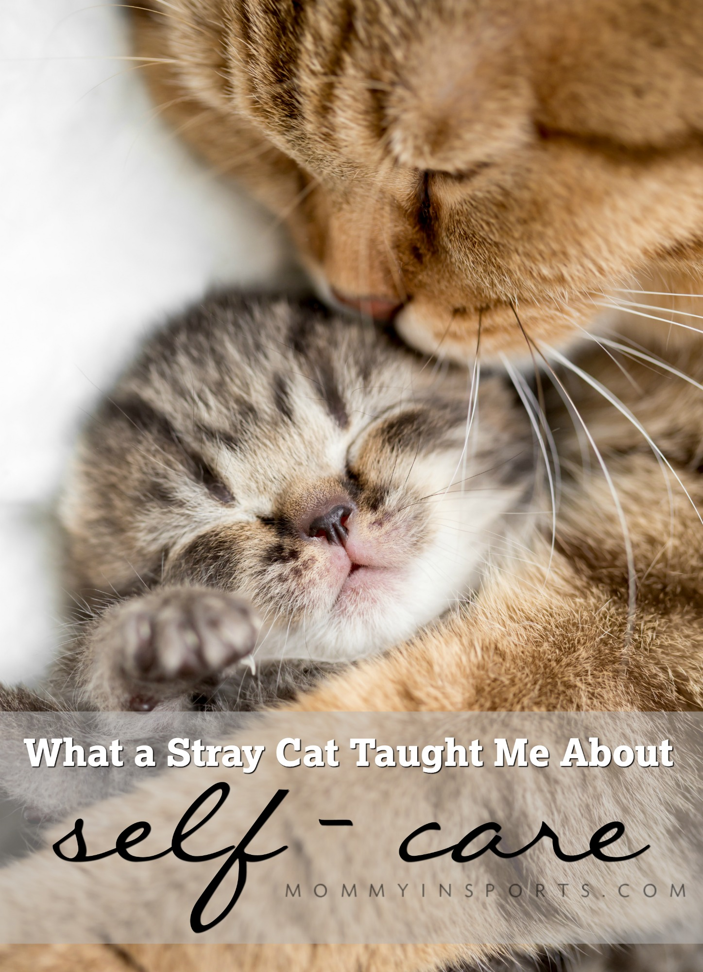 Feeling overwhelmed from motherhood. There are ways to make space in your life for YOU. Read how a stray cat helped me find time for myself, and ways YOU can too!