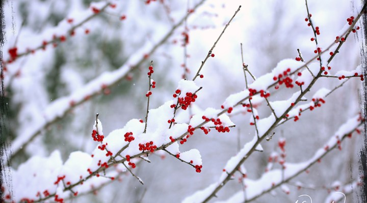 Winter Storm Gia