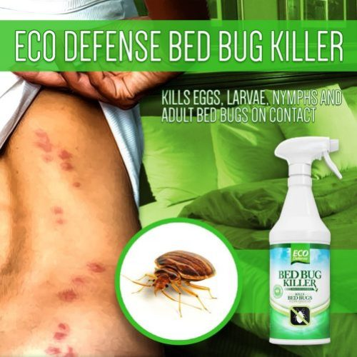 bed bug killer 3
