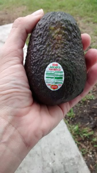 Choosing the Perfect Avocado for Your DIY Taco Bar + $10 PayPal Giveaway   #PublixFiesta #ad   Mommy Runs It