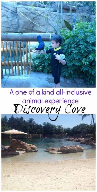 Discovery Cove in Orlando is one of the coolest all-inclusive experiences with animal encounters.