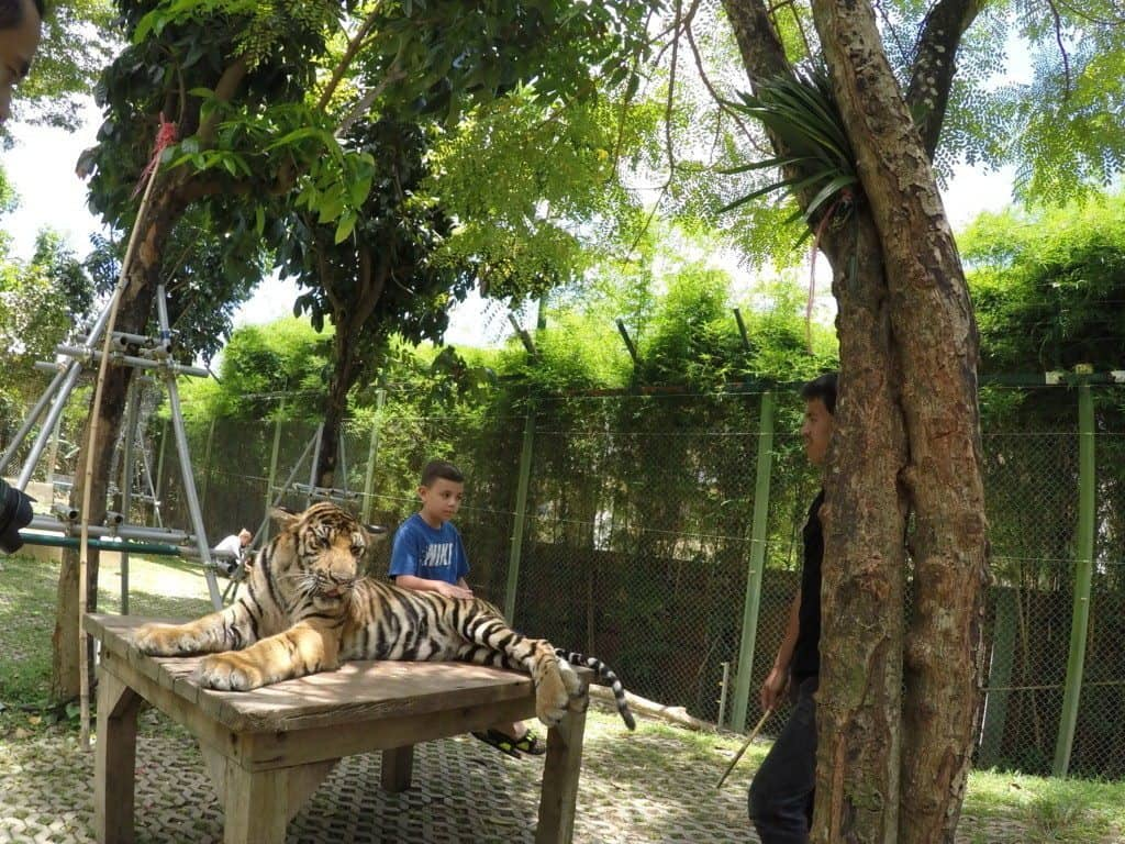 Tiger Kingdom in Phuket, Thailand