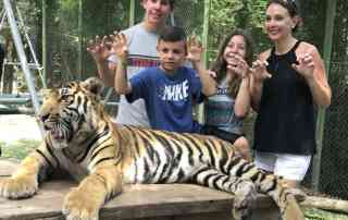 Interact with real tigers at Tiger kingdom Thailand