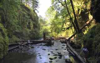 Hiking the Oneonta gorge in the Scenice Columbia gorge area of Oregon. About 50 minutes from downtown Portland.