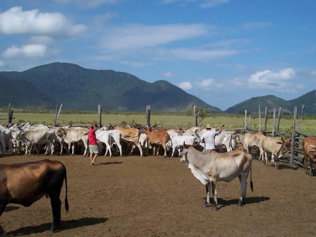 Ranch life in Guyana