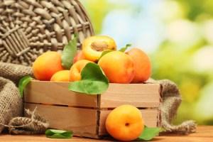 zahrada-ovoce-merunky-1