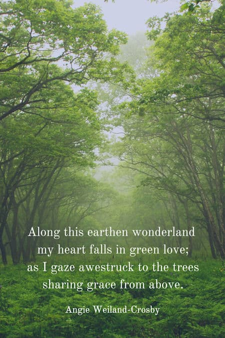 Nature Quotes For The Wandering Soul Mom Soul Soothers