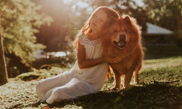Considering to adopt a dog for the kids? How to prepare area for a dog in your home