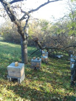 mon-abeille-rucher-du-pilier-2