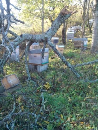 mon-abeille-rucher-du-pilier-5