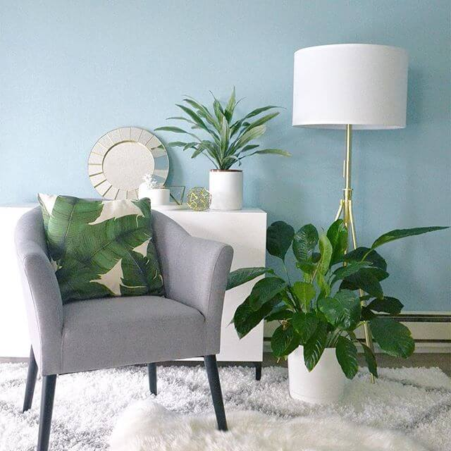 Plant Life – Accessorize Your Home With Amazing House Plants!