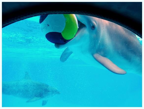 dauphins-parc-asterix