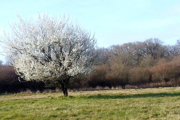 arbre-bonheur