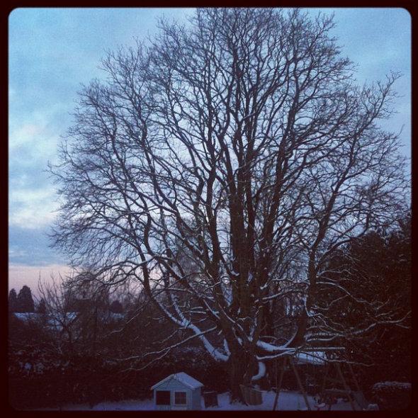 arbre-vivaldi-neige