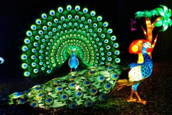 La féérie de Thoiry Lumières sauvages