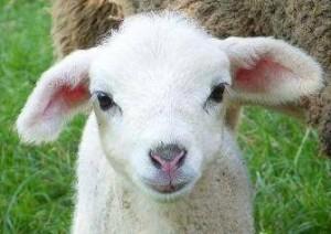 agneau mignon, coachin, développement personnel, l'entreprise est un zoo, le monde de l'entreprise, les collègues