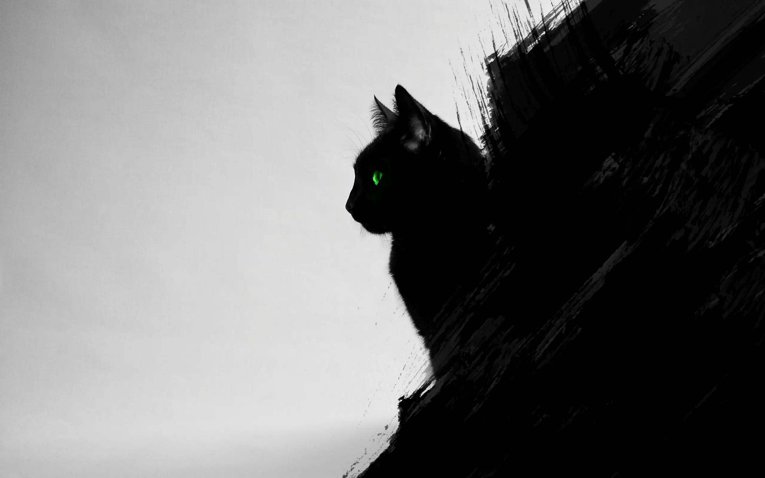 fond d ecran de bureau gratuit un chat
