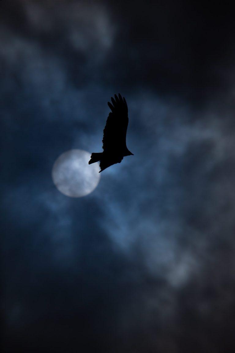 oiseau naviguant la nuit