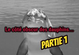 Dauphins : Sexe, rapt et meurtre – Partie 1
