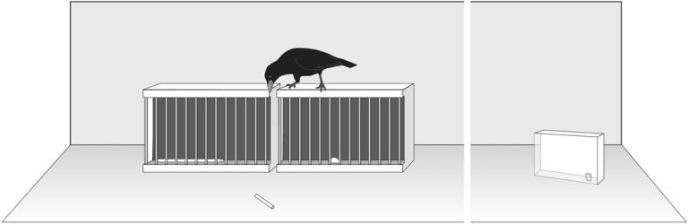 utilisatoin de méta-outil chez le corbeau