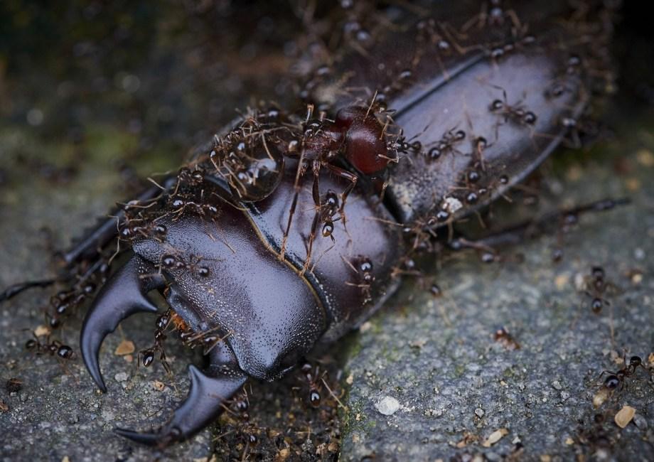 Insectes de plusieurs tailles