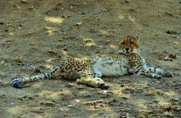 Kruger Safari