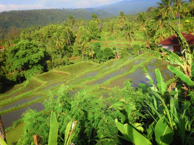 melhores cachoeiras em Bali