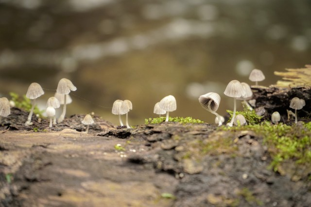 small mushrooms on top of a tree branch