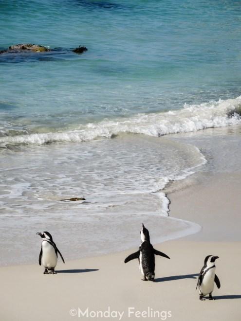 Boulders Beach, as Praia dos Pinguins, é uma das atrações imperdíveis de fazer na África do Sul