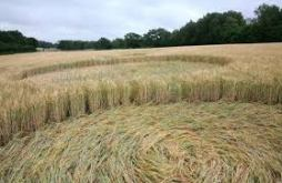ble-courbe-champs-crop-circle