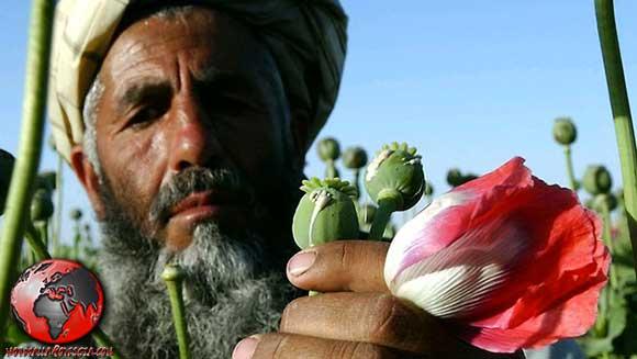 Guerra-all'oppio-Afghanistan