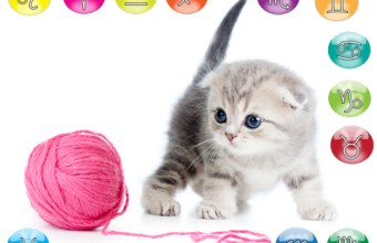 Oroscopo di Novembre per Animali Domestici: il gatto
