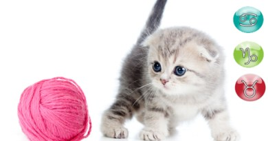 Oroscopo del gatto mese di aprile