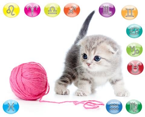 oroscopo del tuo gatto oroscopo animali domestici