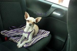vietato lasciare il cane in auto