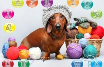 Oroscopo di Gennaio per il tuo cane