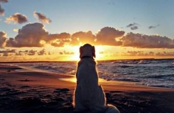 Vacanze, dove puoi portare il cane in spiaggia