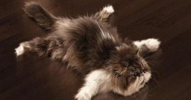 gatti stressati cosa fare