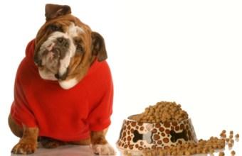 Animali Domestici Obesi, obesità allarma veterinari