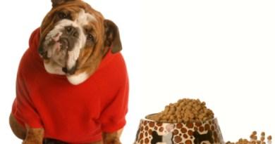 Animali domestici obesità