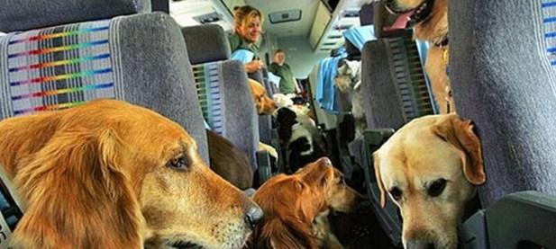 Animali in aereo, come comportarsi