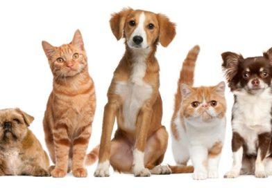 Cani e gatti, guida ai parassiti intestinali