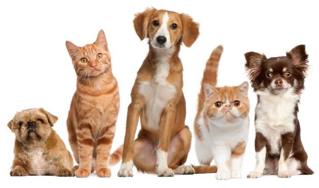 Animali Domestici quanto ci costano