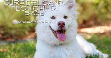 cura del cane tecniche di base