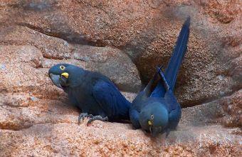 5 migliori pappagallini parlanti