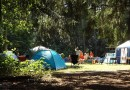 In campeggio con il cane: 7 consigli utili