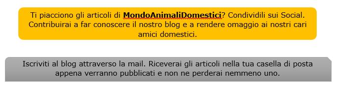 mondo animali domestici