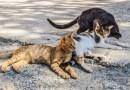 Cos'è una colonia felina, gatti e leggi nazionali