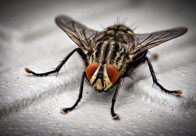Sognare insetti: qual è il significato?