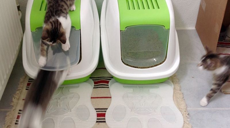 Come scegliere la lettiera per gatto